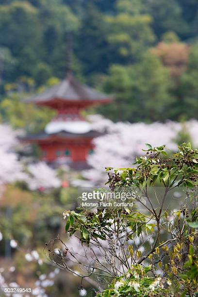 Pagoda and fully blossoming sakura trees behind a green branch in the publicly available Kiyomizu-dera temple grounds.