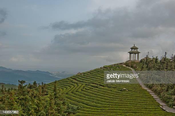 Pagoda on tea mountain