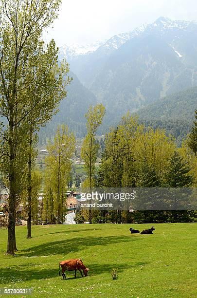 Pahalgam Landscape, Jammu & Kashmir, India