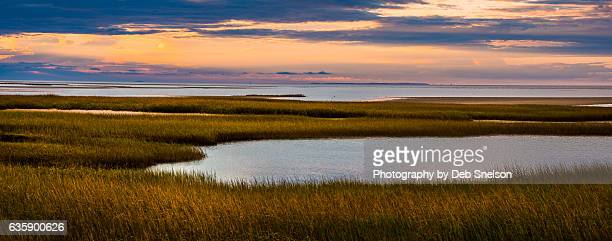 paines creek marsh - salt_marsh stock pictures, royalty-free photos & images