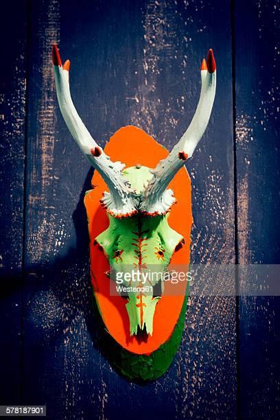 Painted antler of roe deer hanging on wooden wall