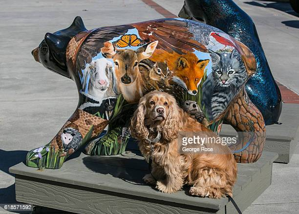 Painted bear sculptures decorate the front of the county courthouse located 22 miles southwest of Asheville is viewed on October 20 2016 in...