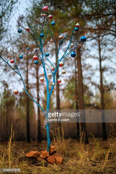 painted blue stick decorated with christmas baubles, standing in front of trees that have recently been burned by a forest fire. - lianne loach stock pictures, royalty-free photos & images