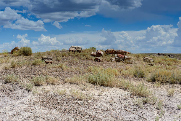 Painted Desert & Petrified Forest National Park