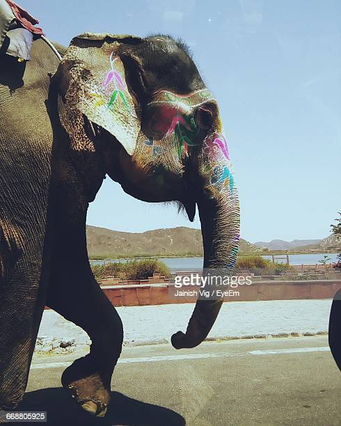 Painted Elephant Walking On Road