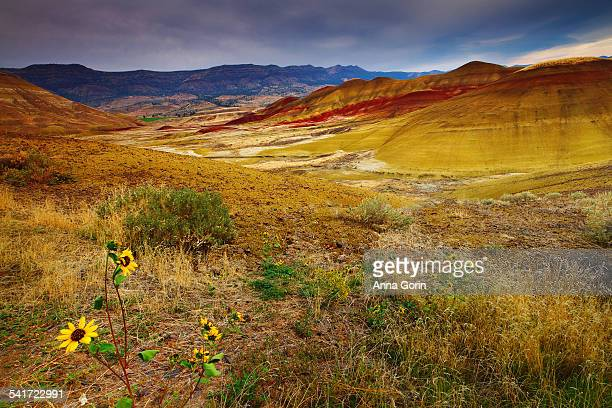 painted hills and yellow wildflowers, oregon - fossil site stock pictures, royalty-free photos & images