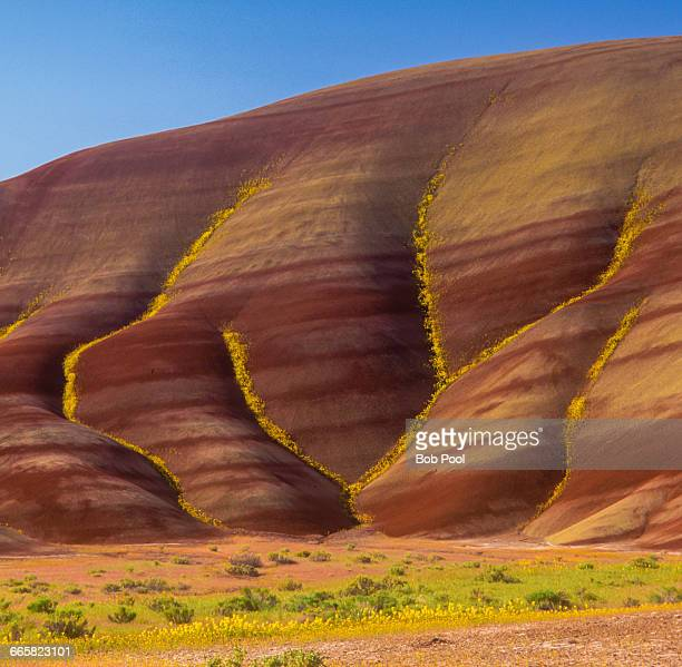 painted hills with yellow flowers - painted hills stock pictures, royalty-free photos & images
