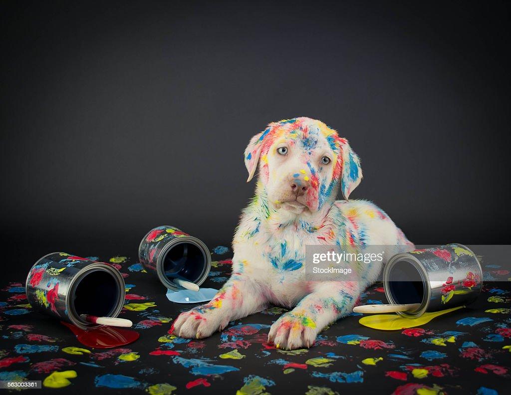 Painted pooch : Foto de stock