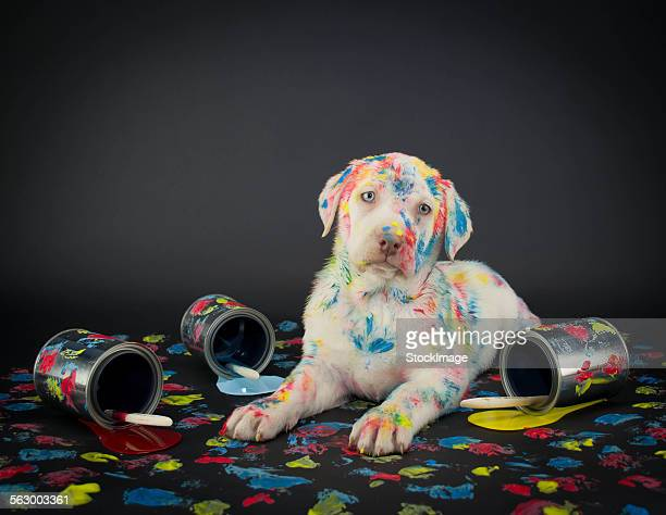 Painted pooch