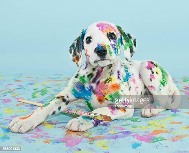 painted puppy - dalmata imagens e fotografias de stock