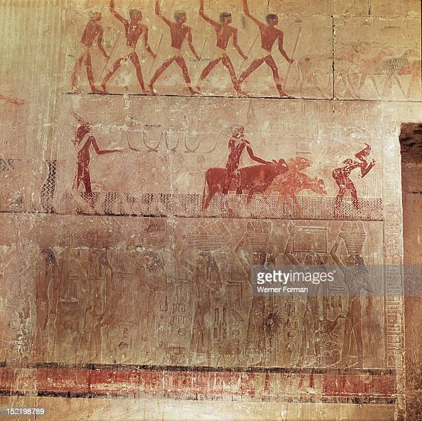 Painted relief from the north wall of the sacrificial chamber of the tomb of Ty The top section shows rams being driven over the seed to tread it...