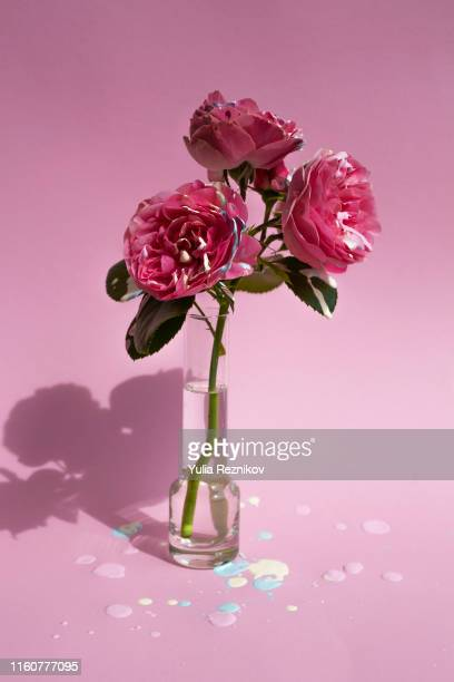 painted rose flowers on pink background - purple roses bouquet ストックフォトと画像