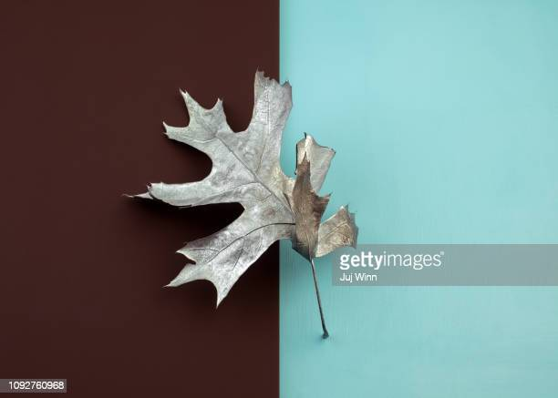 Painted silver oak leaf on brown and blue color blocked background.