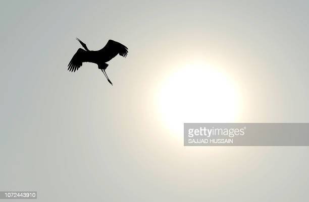 TOPSHOT A painted stork flies over the Delhi Zoo premises in New Delhi on December 13 2018