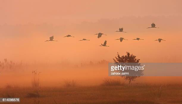 painted stork - nightjar stock photos and pictures