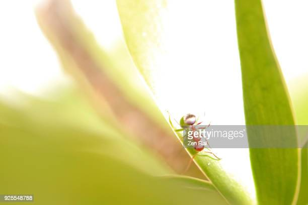 Painterly image of a single Carpenter Ant on a tropical plant