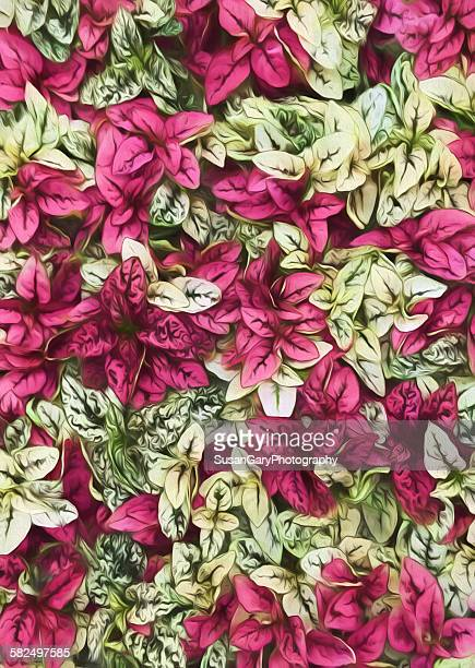 painterly magenta, white and green leaves - georgia okeeffe stock pictures, royalty-free photos & images