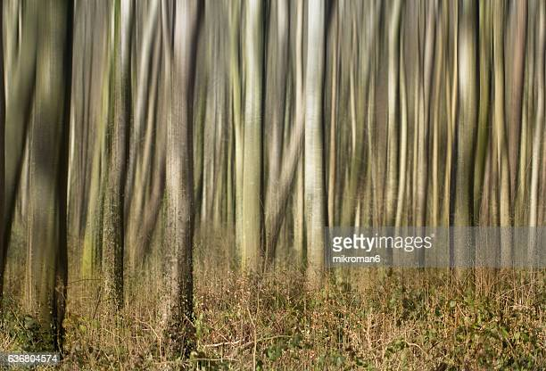 Painterly vision of Irish forest