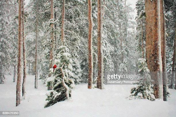 painterly winter trees with cardinal - cardinal bird stock photos and pictures