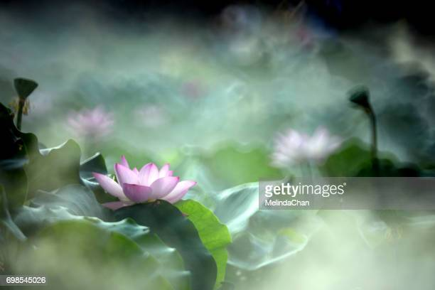 Painting _like Lotus flower shot