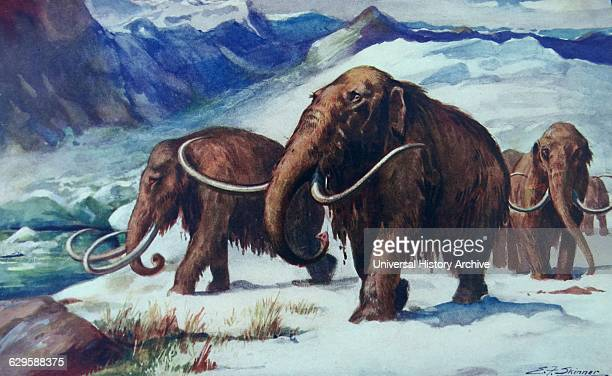 Painting depicting Mammoths roaming the earth during the early ice age