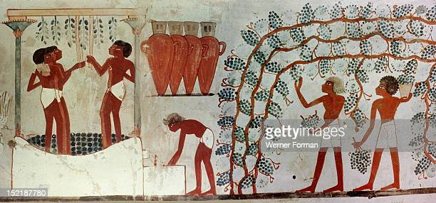 Painting from the tomb of Nakht depicting the gathering if grapes from an arbour the treading of the grapes and the storage of the wine in hars Egypt...