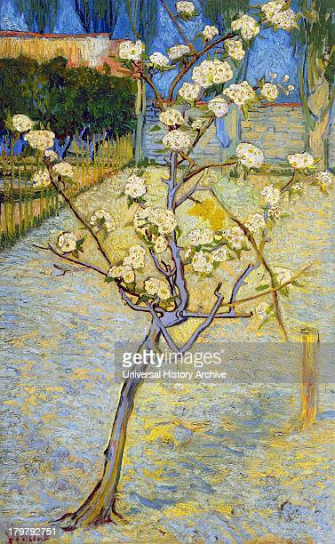 Painting of Small Pear Tree in Blossom 1888 By Vincent van Gogh Oil on Canvas