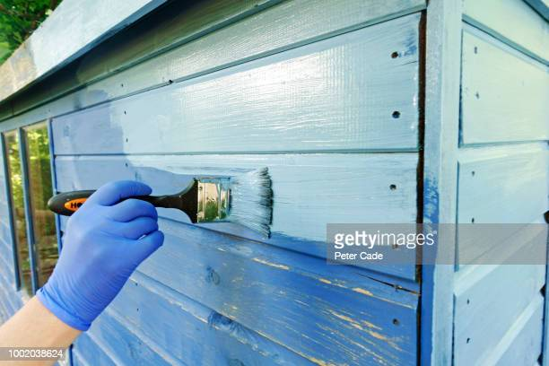 painting shed blue - shed stock pictures, royalty-free photos & images