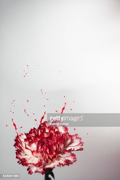 painting the flowers red - mixed media stock pictures, royalty-free photos & images