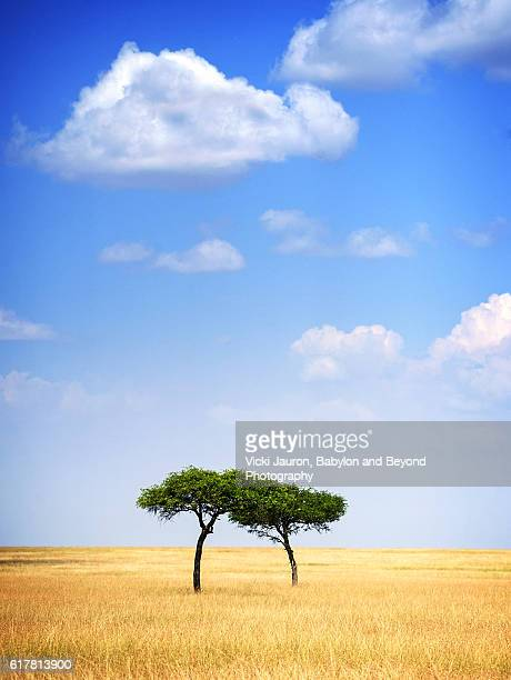 Pair of Acacia Trees in the Serengeti