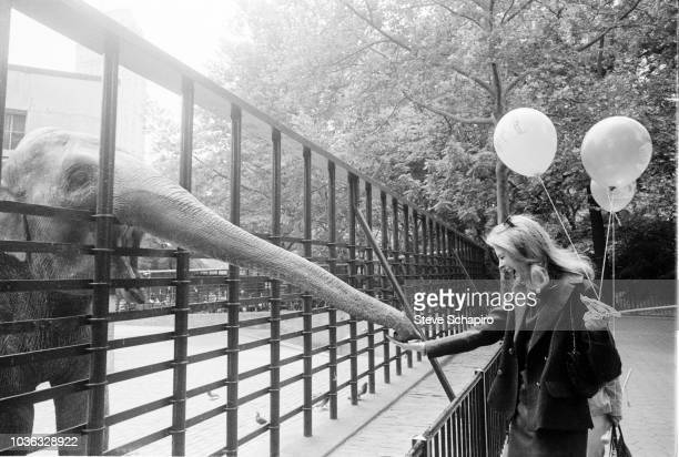 A pair of balloons in one hand American actress Candice Bergen laughs as she feeds an elephant at the Central Park Children's Zoo New York New York...
