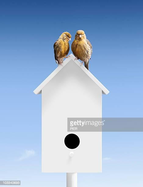 A pair of birds sat close together on bird box