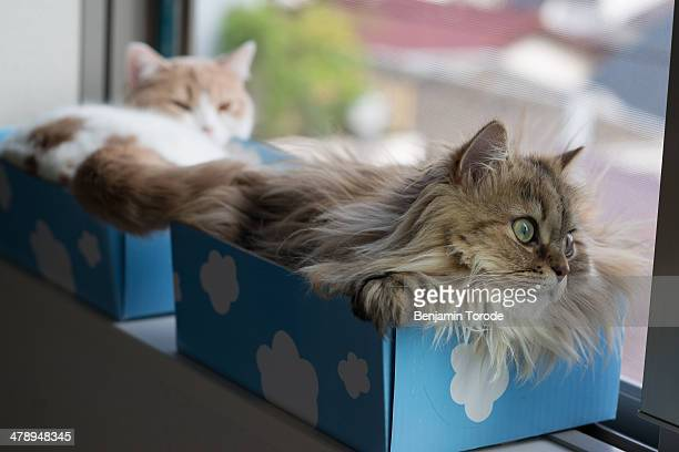 Pair of cats in boxes on windowsil