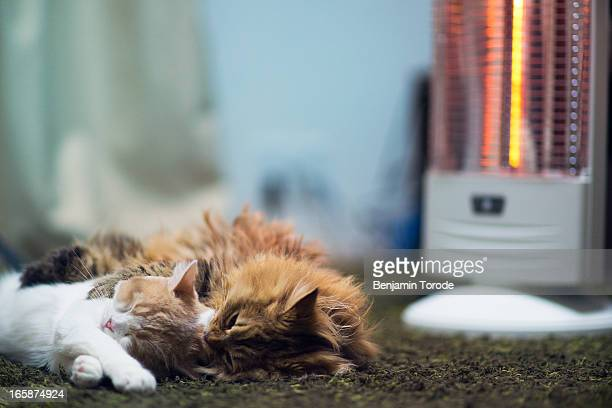 Pair of cats laying in front of heater