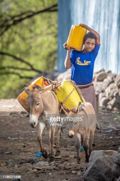A pair of donkeys and a young ethiopian girl carry plastic containers down a dirt street Debre Berhan Ethiopia