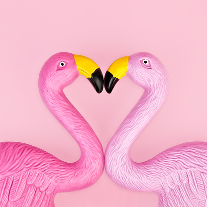 Pair of flamingos - gettyimageskorea