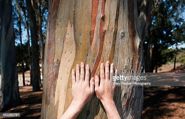 A pair of hands on colourful Eucalyptus bark