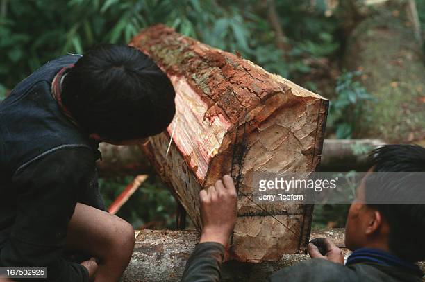 A pair of Hmong boys mark the end of a sandalwood log before cutting it into pieces small enough to be hauled out by adult Hmong men The boys use a...