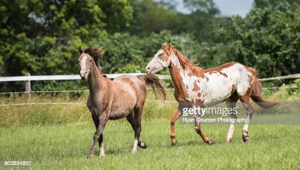 Pair of horses running