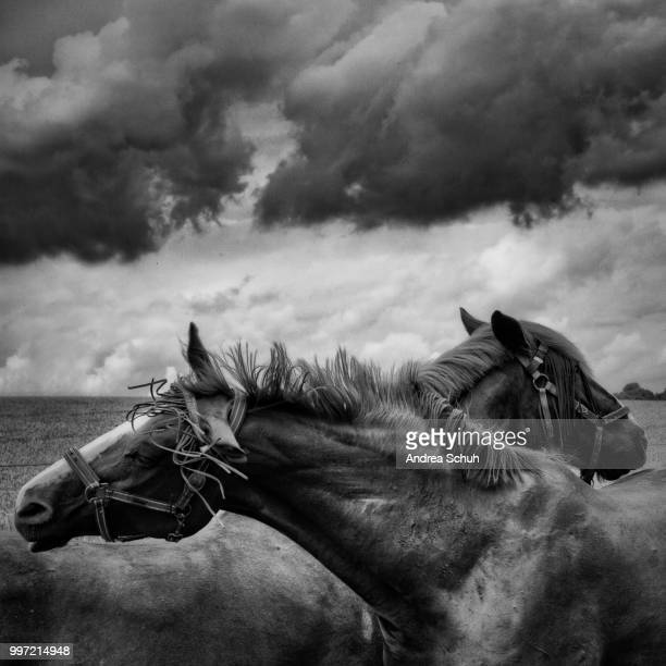 A pair of horses under a cloudy sky.
