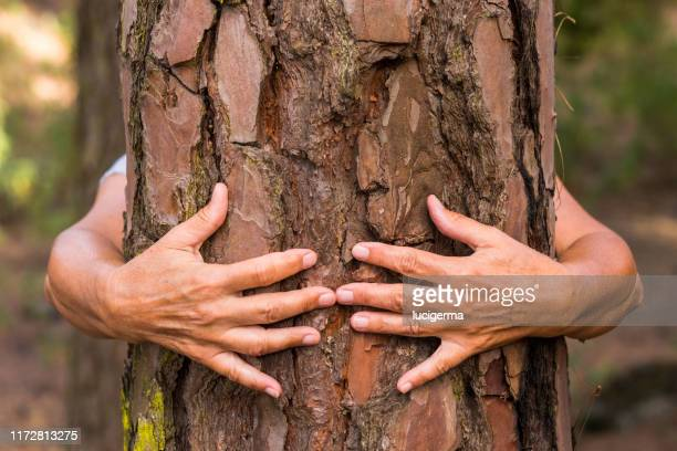 pair human hands hugging tree woods