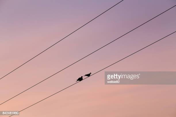 Pair of pigeons on a telegraph wire