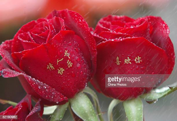 "Pair of roses painted with ""I love you"" and ""Happy Valentine's Day"" is seen at a flower shop February 12, 2005 in Xian of Shaanxi Province, China...."
