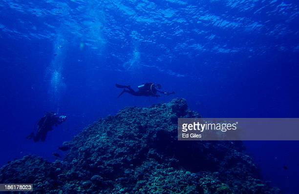 A pair of SCUBA divers swim over coral during a guided dive on October 27 2013 in the Red Sea near the resort town of Sharm El Sheikh Egypt Sharm...
