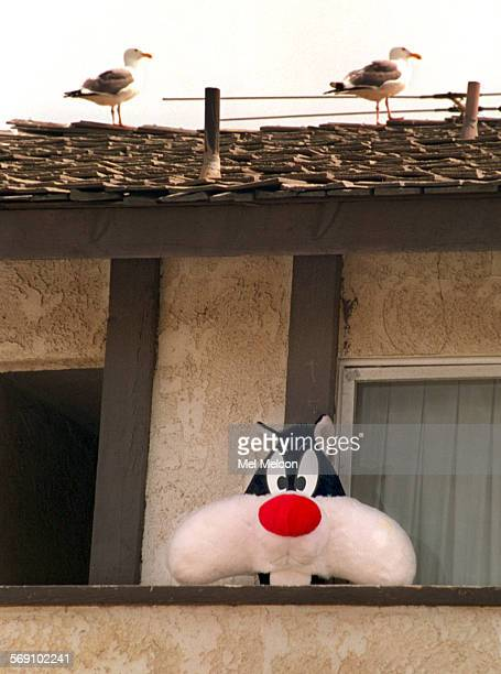 A pair of seagulls are unaware of the presence of a large cat below although its a stuffed one in the form of Sylvestor the cat from cartoon fame The...
