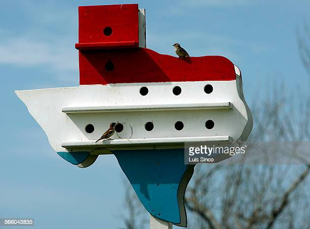 A pair of sparrows build a nest inside a bird house shaped after the Lone Star state The tiny community of High Island Tex population 450 rises about...