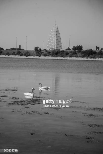 a pair of swans floating in front of the sails of the south by the m275 motorway into portsmouth. - portsmouth england stock pictures, royalty-free photos & images