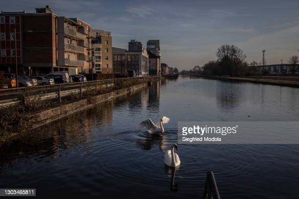 Pair of swans swim in a canal on February 20, 2021 in Mulhouse, eastern France. A year into the pandemic, the east of France remains the most...