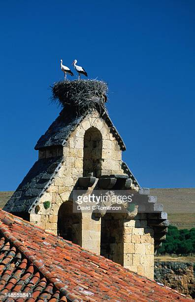 A pair of white storks (ciconia ciconia) nest on a bell-tower in Segovia
