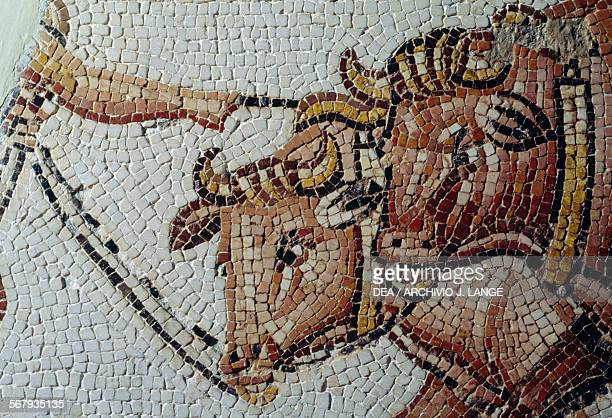 Pair of yoked oxen mosaic depicting rural scene from Uzalis El Alia Tunisia Roman civilisation II century AD Detail Tunis Musée National Du Bardo